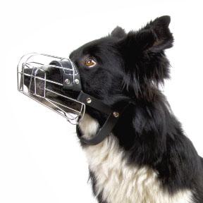 kovové náhubky pro psy