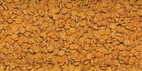 Dajana Gold Colour floating chips