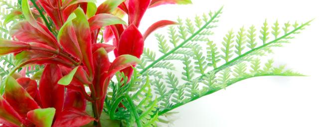 Akvarijní rostlinka Ludwigia červenozelená