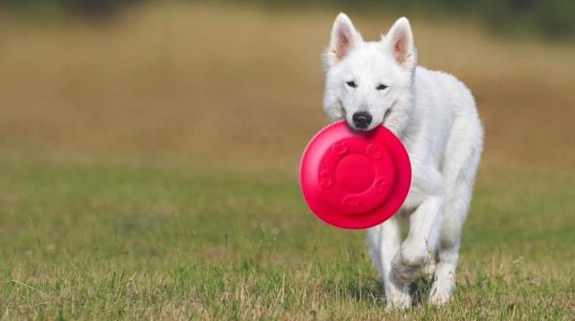 Frisbee červené 22 cm, odolná hračka z EVA pěny