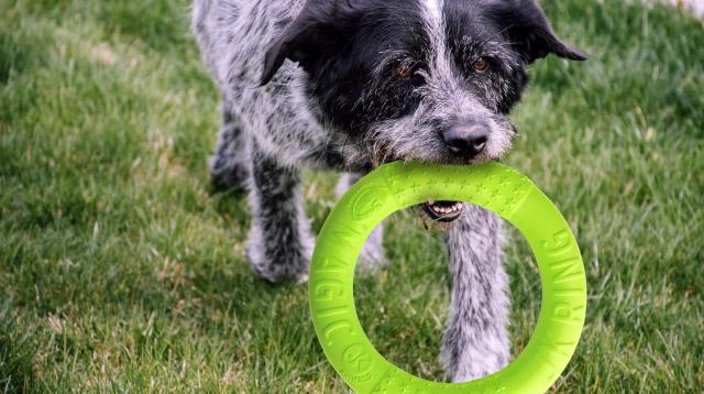 Magic Ring zelený 27 cm, odolná hračka z EVA peny