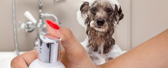 Prémiový šampon pro drsnou srst, 250ml