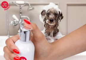JK ANIMALS Prémiový šampon pro yorkšírské terriéry, 250ml | © copyright jk animals, všechna práva vyhrazena