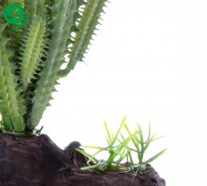 JK ANIMALS Terarijní rostlinka Kaktus Kalahari, cca 19 cm | © copyright jk animals, všechna práva vyhrazena